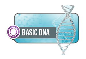 ThetaHealing® Basic DNA in Illingen