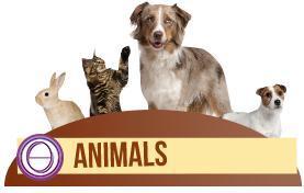 ThetaHealing® Tierseminar - unterrichtet durch Karolina Frei